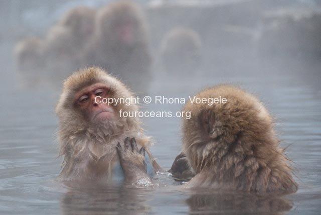 2009_07_27-284-snow-monkeys.jpg