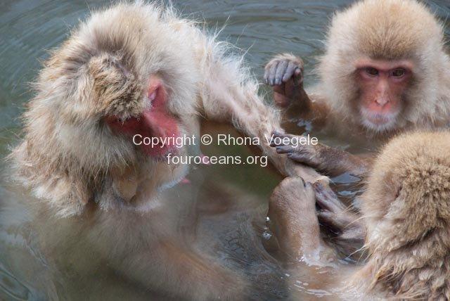 2009_07_27-314-snow-monkeys.jpg