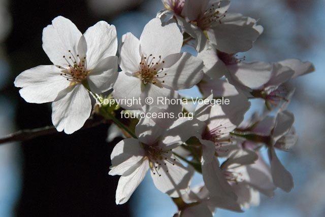 2009_04_09-077-nara.jpg