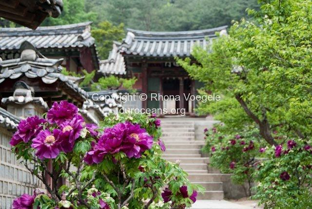 2009_05_11-andong-26.jpg